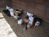 some of our chickens